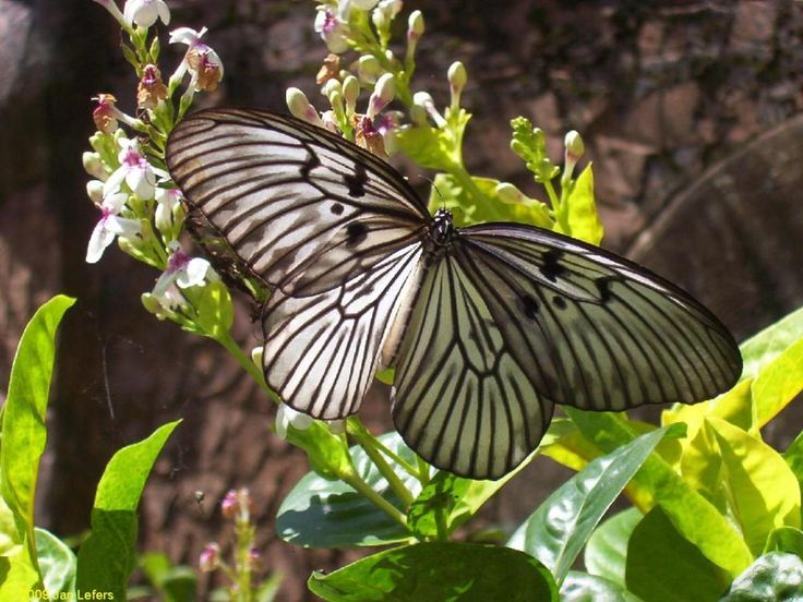 Bali Butterfly Park, Tabanan - recenze Bali Butterfly Park - TripAdvisor