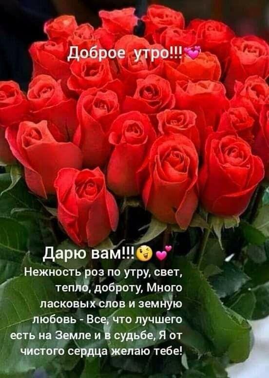 нас картинки с розами пожеланием доброго утра она напоминает