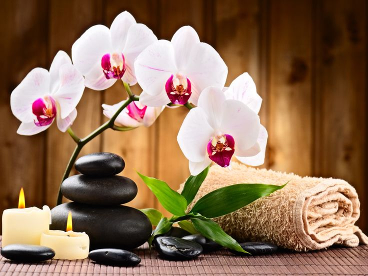 17 best images about zen relax nature spa on pinterest for Salon toilettage zen attitude