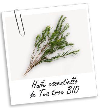 Huile essentielle Tea Tree (Arbre à Thé) BIO Aroma-Zone