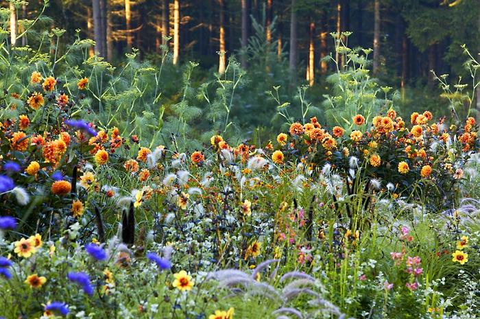 The Soft-Orange Border, Fleur van Zonneveld. Photo by Claire Takacs: Photo