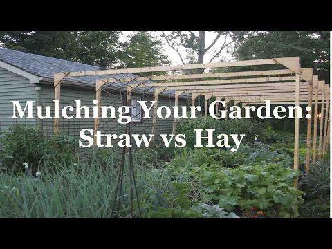 Mulching Your Garden: Straw versus Hay - YouTube