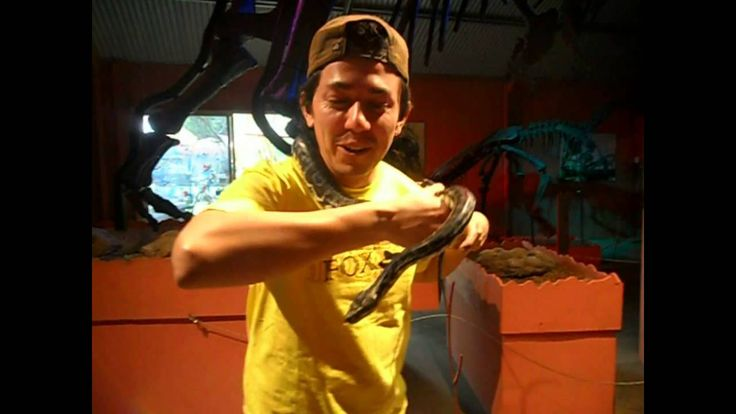 Fairdinkum latino, Fear Fear Fear. Snake vs Charlie            Its scary about snakes and he puts one #youcandowhateveryouwant  #mottivation