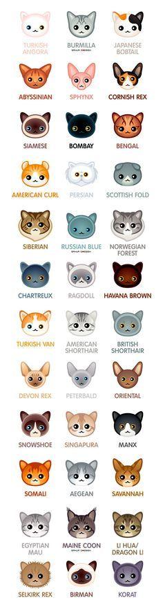 Ache a raça do seu gatinho...