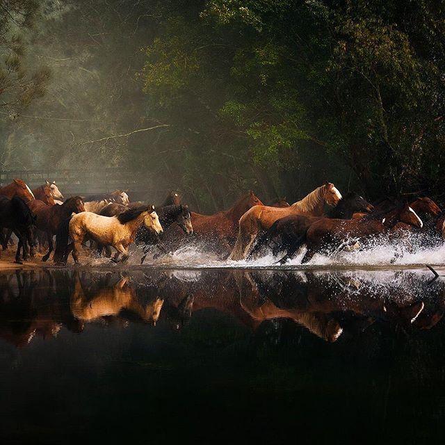 38bbd8ae11b786b0b82d04e2d871231e--wild-horses-running-mustang-horses.jpg