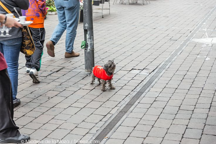 Dog Waiting, Tirso de Molina, Madrid.