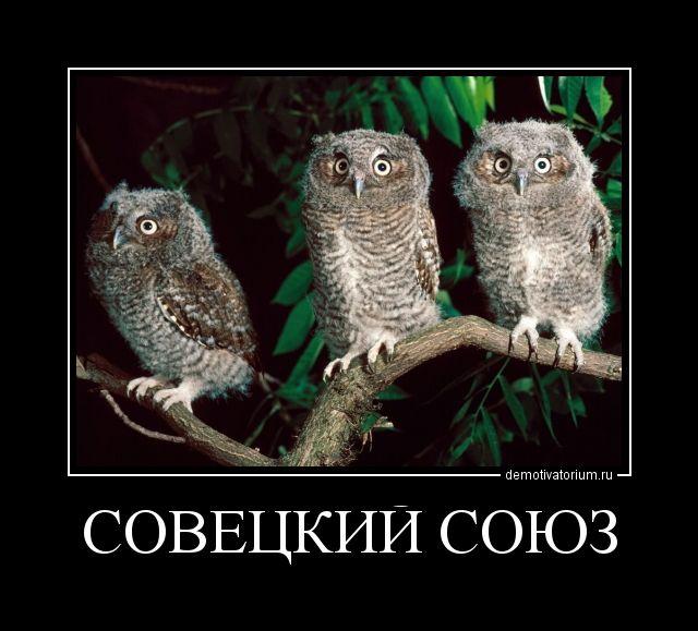 Смешные картинки с надписями про сов