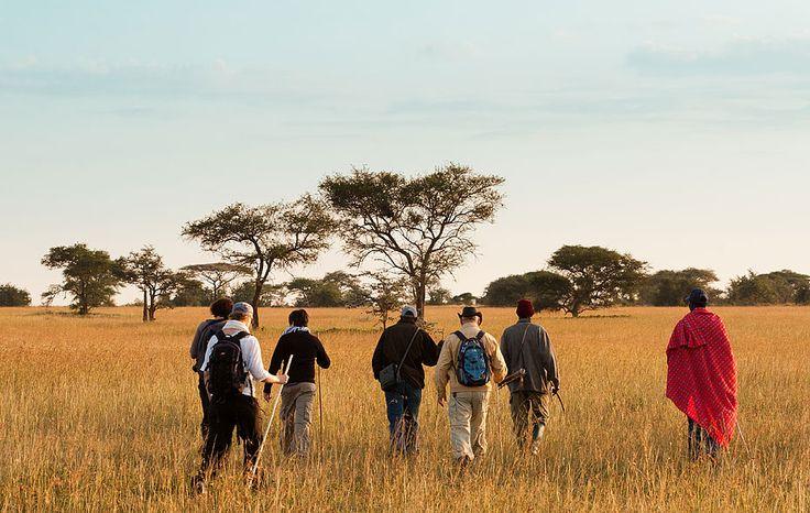 Tanzaniasafari. Världens bästa safari finner ni på er resa till Tanzania. Africana Travels Tanzaniasafari tar er närmare med noga vald rutt och småskaligt boende