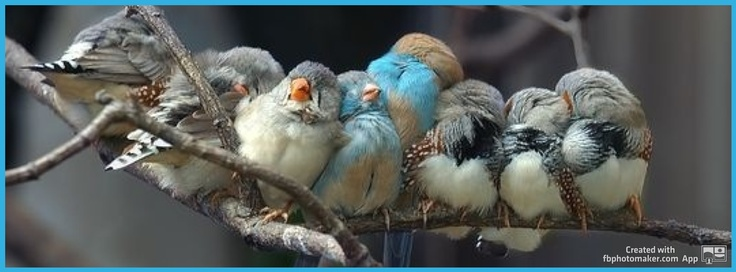 Birds warming up, birds on a tree branch, family  - facebook cover photo, fb covers