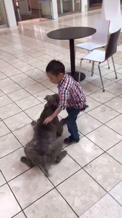 闘犬で知られるピットブルとは思えない人懐っこさ