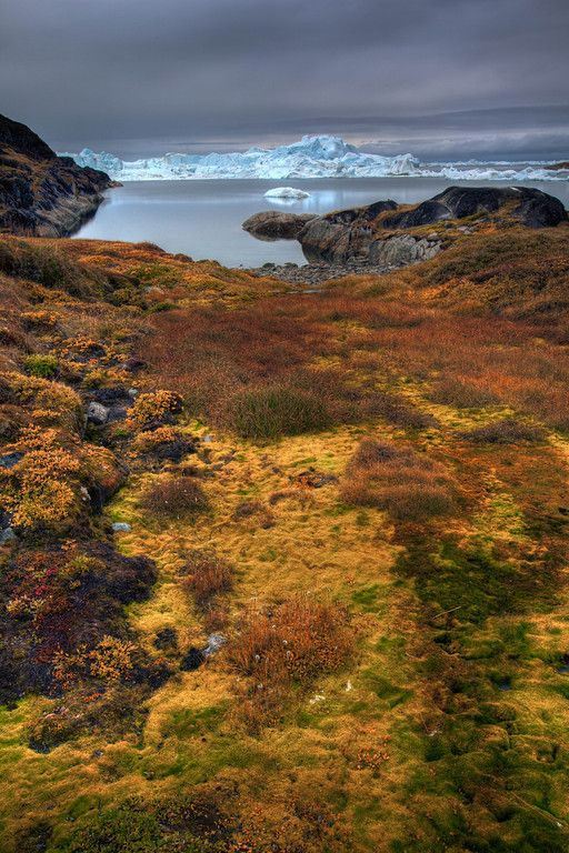 The gorgeous colours of the Actic Tundra in Greenland. #photography #travel