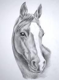 Resultado de imagen de dibujos a lapiz de caballos