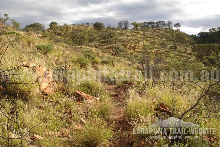 Track Cam: Typical track conditions and scenery along Section 2, Larapinta Trail. This shot was taken near Mulga Camp. © Explorers Australia Pty Ltd 2013