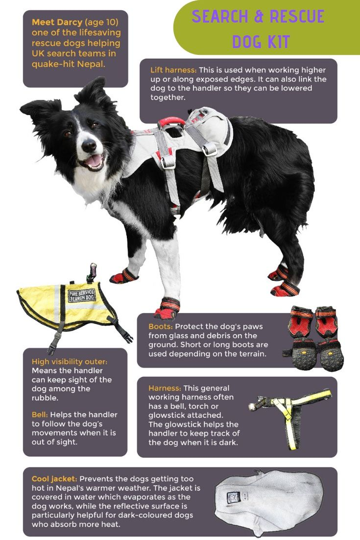 Search And Rescue Dogs Gear Search And Rescue Dogs Rescue Dogs