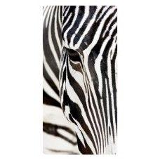 Zebra falikép