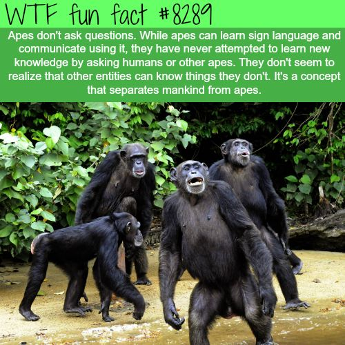 The concept that separates mankind from apes  WTF fun facts