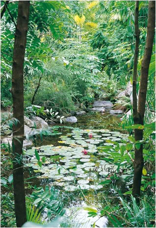 Water lilies at Ramada Port Douglas