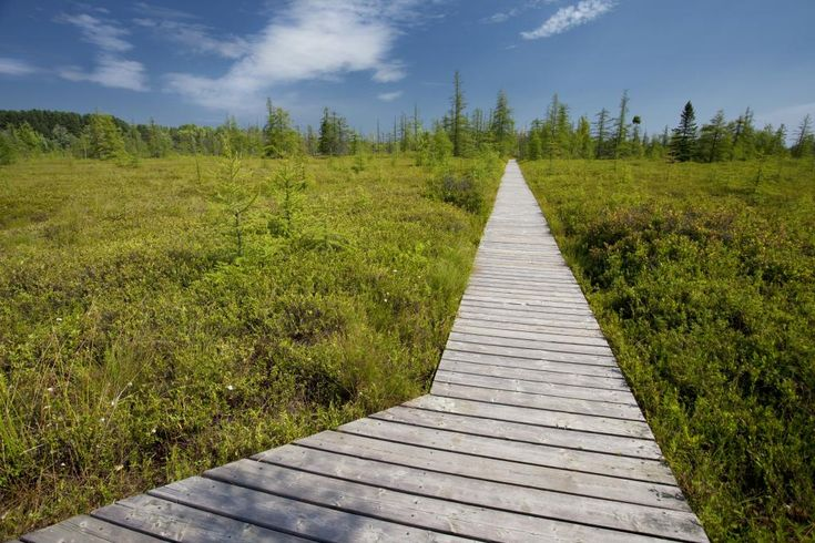 Discover the Mer Bleue bog! http://www.ncc-ccn.gc.ca/places-to-visit/greenbelt/mer-bleue