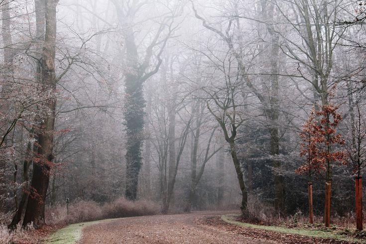 Mlha, Park, Přírody, Krajiny, Les, Stromy, Nálada