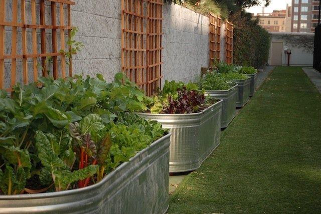 galvanized cattle trough raised garden beds