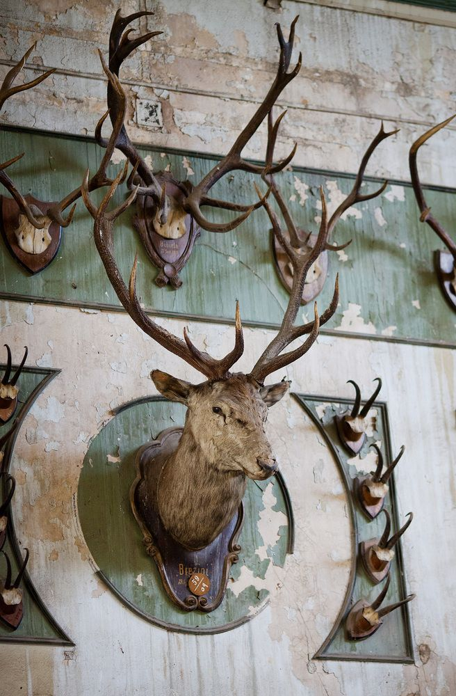 Taxidermy: The Beauty And The Unease | Jill Goldberg