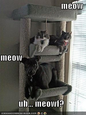 hahahahah!: Cats Trees, So Funnies, Funnies Pictures, Funnies Cats, Silly Dogs, Pet, Funnies Animal Pictures, Dogs Cats, Funnies Stuff