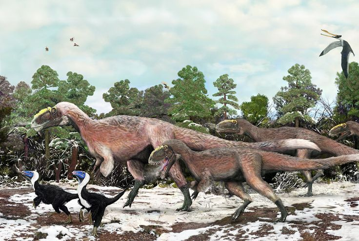 Largest feathered dinosaurs uncovered in China