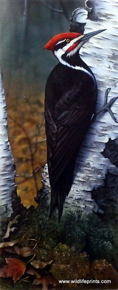 The red, black and white woodpecker works hard against the birch tree in this Giclee by Jerry Gadamus.