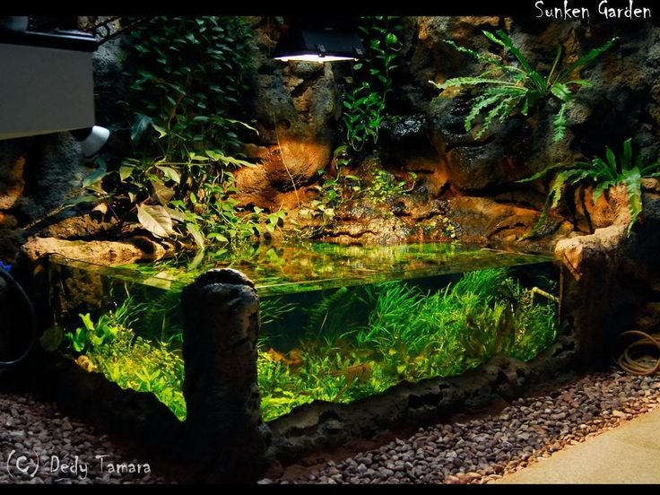 17 best images about turtle ponds on pinterest tassels for Indoor fish pond