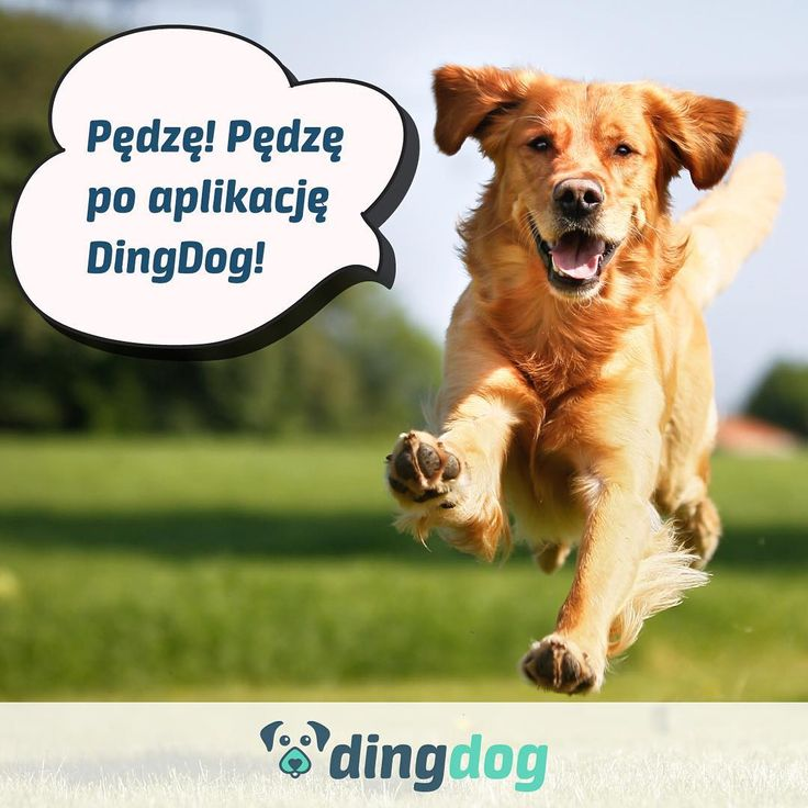 Stało się! Można już pobierać aplikację. #DingDog #pies #spacer #app #dog #walk