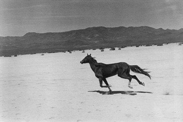 Por trás de uma história sobre cavalos selvagens, The Misfits (Os Inadaptados) fala metaforicamente sobre a Liberdade e, no fundo, sobre a América. Com um excelente argumento da autoria do escritor americano Arthur Miller e a realização notável de John Huston, o filme conta ainda com uma extraordinária coincidência de talentos. Magnum Photos
