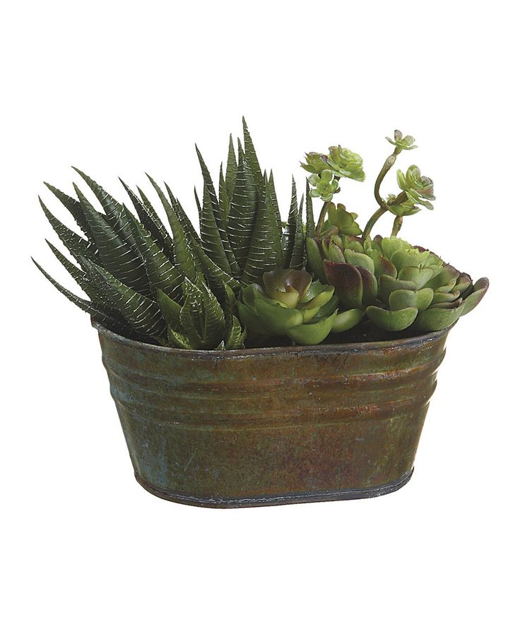 6 39 39 succulent garden bucket gardens crafts and buckets for Allstate floral and craft