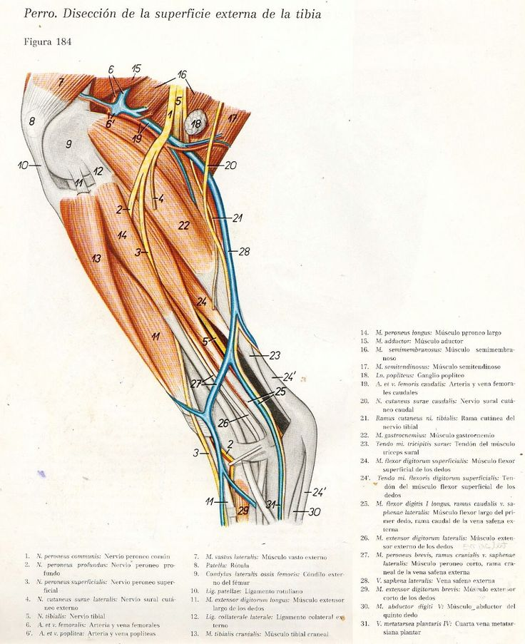 10 best Medicina y Anatomia Equina images on Pinterest | Horse care ...