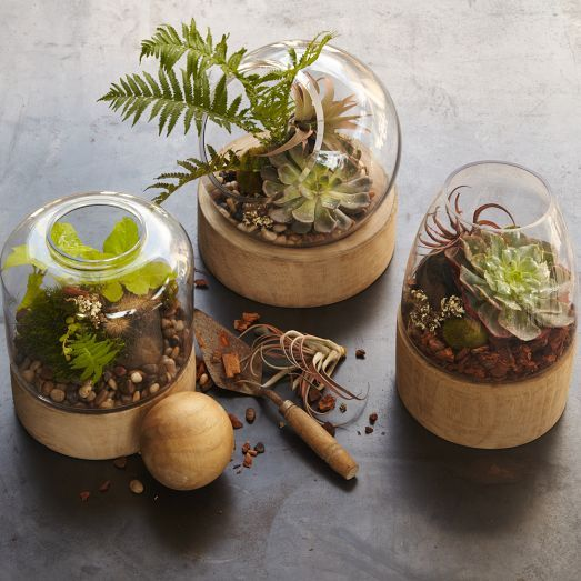 Glass Terrariums + Wood Base