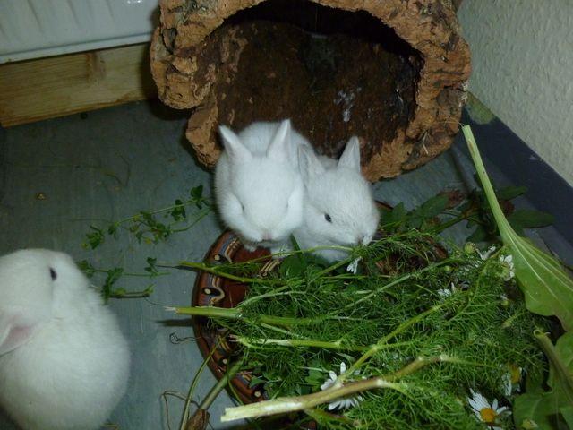 Paarung Geburt Und Aufzucht Kaninchenbabys Nachwuchs Kaninchen