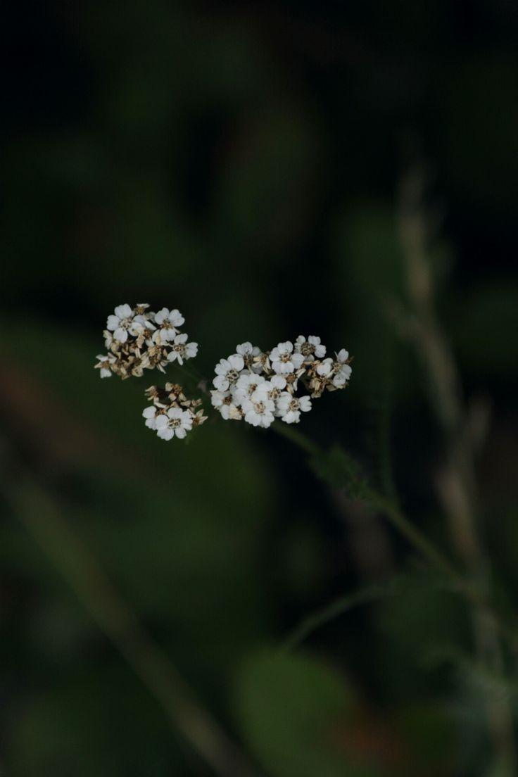 September, Rölleka