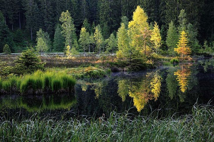 Hier kommt die Wildnis zurück Siebenschläfer, Kreuzotter, Akelei und Wollgras - im Nationalpark Schwarzwald können sie sich wieder ungehindert ausbreiten. Ein neuer Bildband fängt die Wildnis ein
