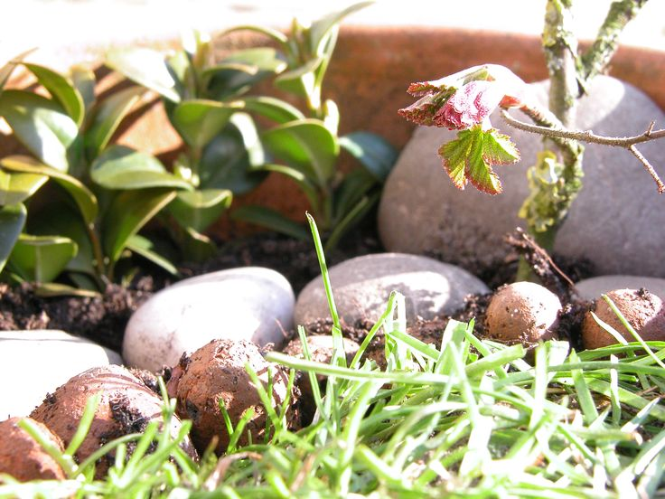 Made my own miniature garden!