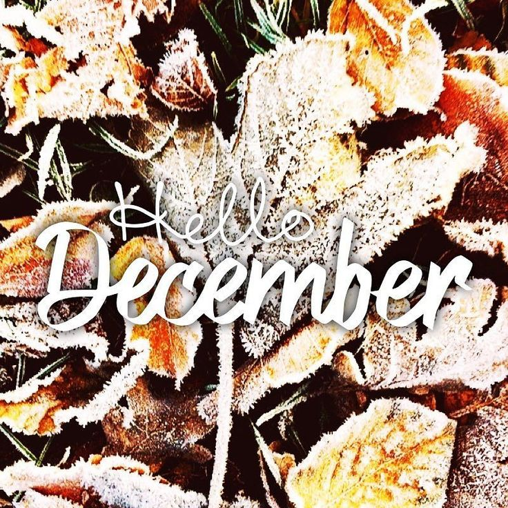 #hellodecember 1st month of winter last month of the year and then #christmas month too. #december #merrychristmas #christmastree #family #christmaseve #life #xmas #santa #merrychristmaseve #holiday #winter #love #gifts #holidays #lights #presents #tree #carols #decorations #santaclaus #snow #gift #green #happyholidays #ornaments  #merryxmas #jul  #fontcandy @easytigerapps