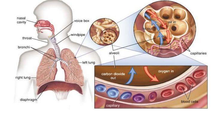Respiration.pdf                                                                                                                                                                                 Más