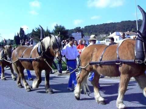 Desfile de cavalos em Chateaurenard: record mundial - YouTube