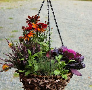 Fall Hanging Baskets and I love them! Definitely more of them in my future. Ornamental Cabbage, Heather, Blue Fescue, Gaillardia, Aster and Pansies