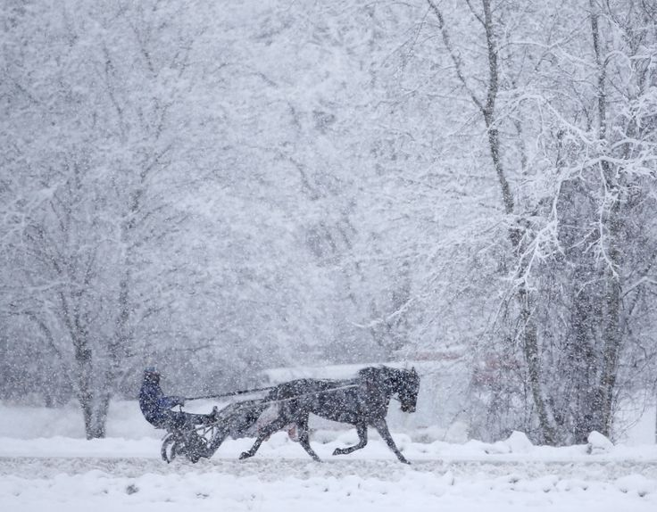 Một con ngựa kéo xe vào một buổi sáng đầy tuyết trong một buổi tập trên đường đua ở  Trường đua Saratoga ở Saratoga Springs, New York.