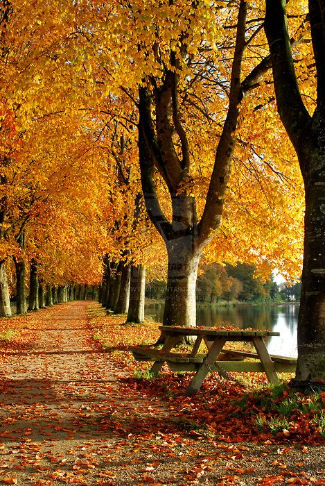 picnic table by the lake in Fall