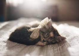Výsledok vyhľadávania obrázkov pre dopyt cute cat in bed