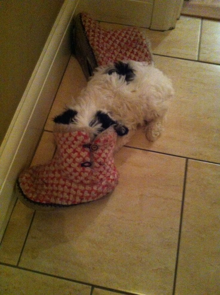 'I love to sleep in slippers!' My silly little baby fell asleep like this, not to sure what she was doing there in the first place.. but she looks super cute <3 xo