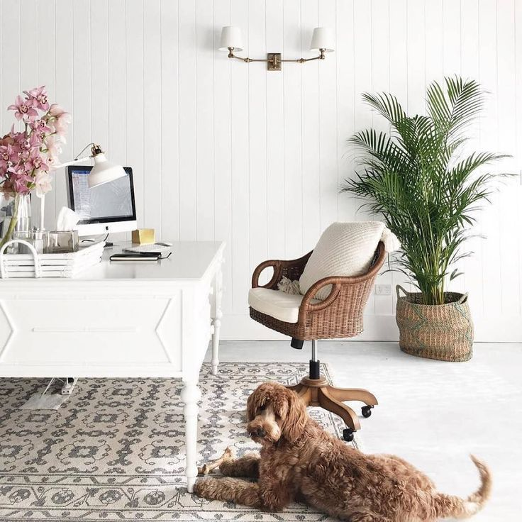 Can we take moment to say we are green with envy over @alannasmitdesigns beautiful work space featuring our Wingate Rattan Swivel Chair?  But we are most jealous of the furry office mates! 🐶 #homeoffice #FriYAY #mypotterybarn #brightwhite #whiterooms