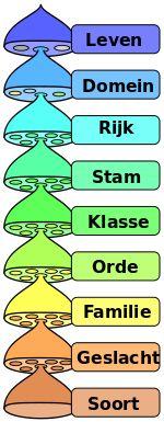 Verschillende niveaus van het wetenschappelijk classificatiesysteem. Taxonomie