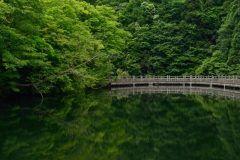 滋賀県高島市のもみじ池っていう池があるんですけどこの池は今の時期に周りを散策するととっても気持ちいいですよ 本当に水が澄んでいて湖面に映る新緑はまるで絵画の世界みたいですよね() 関西でも数少ない絶景スポットだと思いますよ tags[滋賀県]