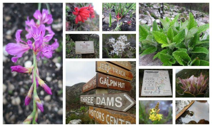 Fernkloof Nature Reserve Address: Hermanus, Overberg  Tel: +27 28-3130819 Email: botsochermanus@telkomsa.net